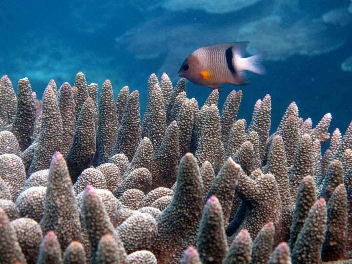 reef at Turtle Bay Lodge